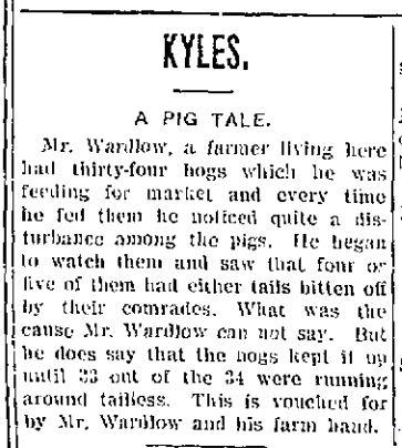 1903 0317 pigs
